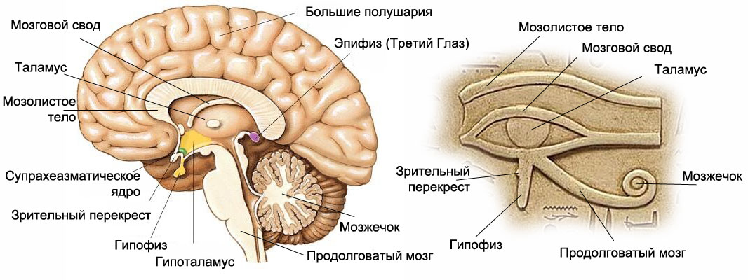 Тайна шишковидной железы