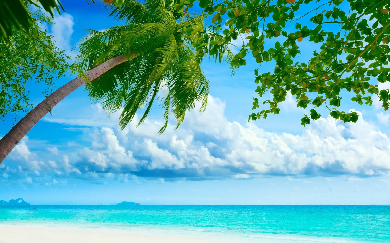 Nature_Beach_Beach_at_the_blue_ocean_036818_